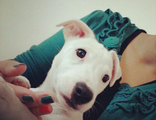 20 stvari koje sam naučila od svog psa